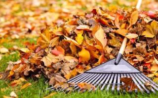 Зачем убирать листья осенью
