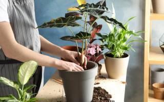 Пересадка домашних цветов осенью