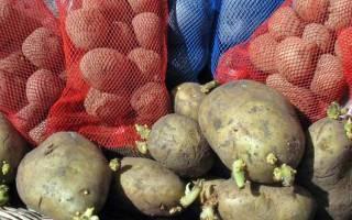 Обработка семенного картофеля перед посадкой