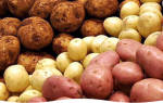 Способы посадки картофеля на даче