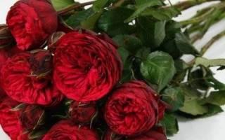 Какие цветы похожи на пионы?