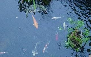 Копанка для рыбы в огороде