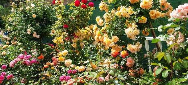 Популярные многолетники для сада