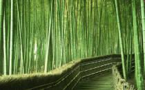 Бамбук это трава или дерево