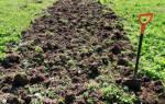 Надо ли перекапывать сидераты осенью