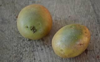 Чем опасна зеленая картошка
