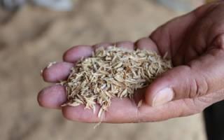 Рисовая шелуха как использовать на огороде