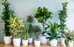 Какие комнатные растения можно вырастить из семян