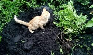 Как отвадить чужого кота с дачного участка
