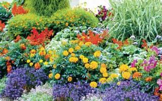 Морозостойкие цветы для дачи