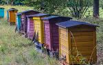 Пчеловодство с чего начать новичку