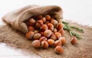 Как вырастить лещину из ореха