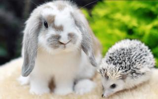 Что едят декоративные кролики список
