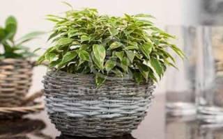 Полив комнатных растений в отсутствии хозяев