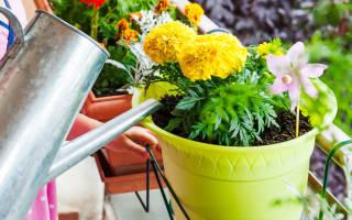 Можно ли поливать комнатные цветы минеральной водой