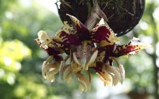 Редкие орхидеи: виды и их описания