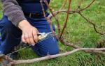Обрезка садовых деревьев и кустарников осенью