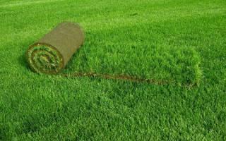 Рулонный газон или посевной что лучше