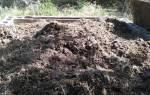 Кроличий помет как удобрение для огорода