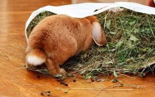 Чем питается кролик в домашних условиях