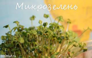 Микрозелень как вырастить самому