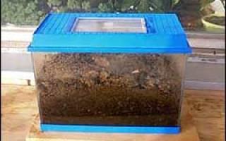 Чем подкармливать дождевых червей в домашних условиях