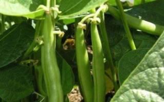 Фасоль выращивание и уход в открытом грунте