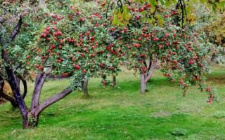 Какие деревья можно сажать осенью