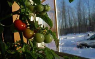 Какие овощи можно вырастить на подоконнике зимой