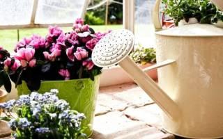 Подкормка домашних цветов народными средствами