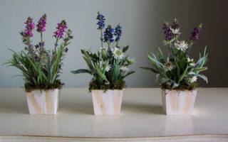 Можно ли держать дома вьющиеся комнатные растения