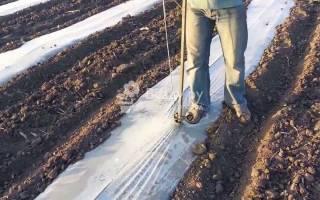Как выращивать дыни и арбузы в подмосковье