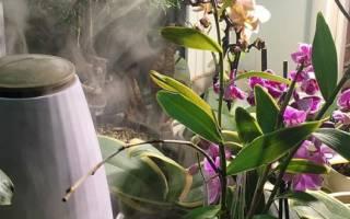 Какой водой поливать орхидею в домашних условиях