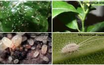 В земле комнатных растений завелись белые насекомые