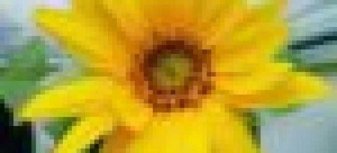 Плесень в горшках комнатных цветов